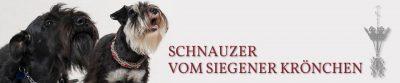 header_schnauzer